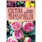 Cultura trandafirilor